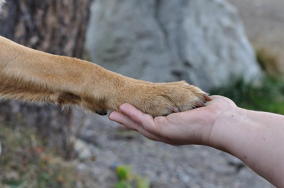 Pour les animaux